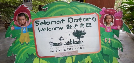 Welcome to The Farm In The City
