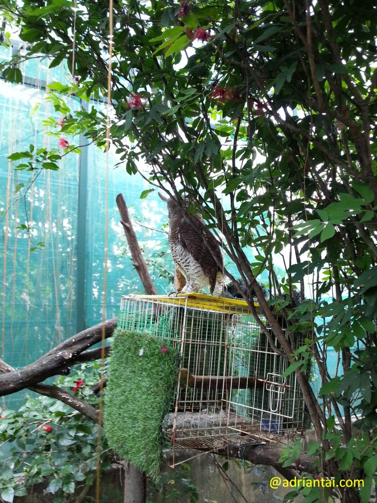 Owl in the farm in the city