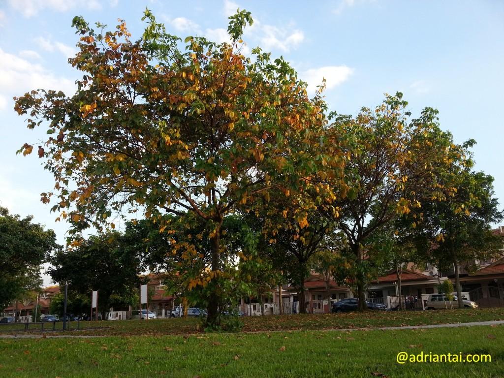 Autumn in Setia Alam